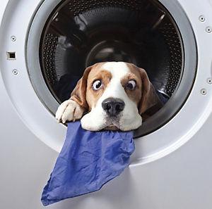 Prendre soin de ses chaussettes d'équitation KozySocks en les lavant à la machine